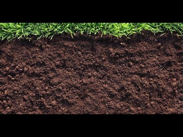Использование микробных удобрений