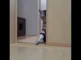 Гипно-кот 🔮 / The cat is mesmerizing 🔮