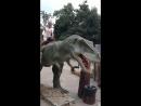 выставка живых динозавров