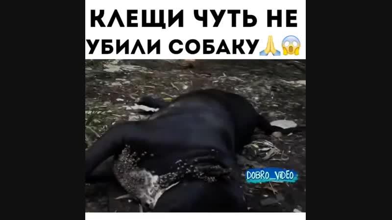 Клещи.ПУТЬ ДОМОЙ.Саяногорск.mp4