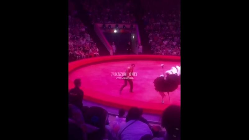 В цирке растерянный страус набежал на людей сидящих в первых рядах