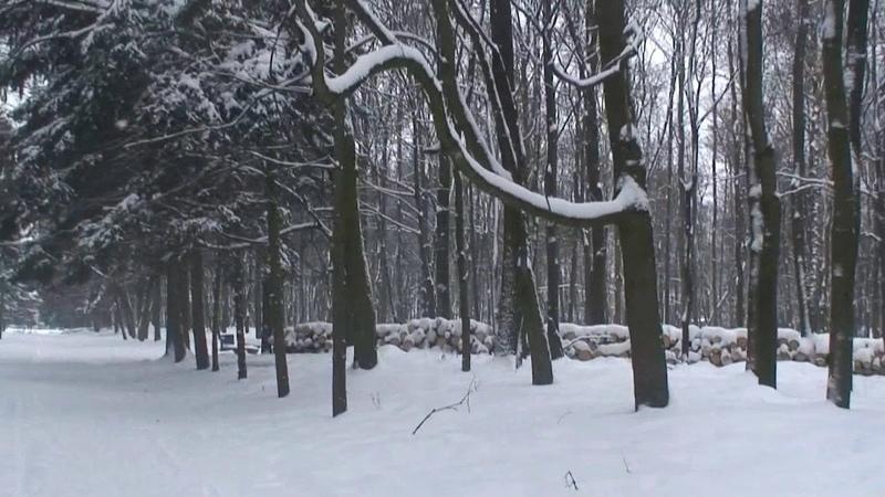 Лыжный квест в стиле Твин Пикс