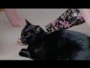 Адская кошка 42 Страшно рассмеяться Реальное ТВ животные фелинология 2014