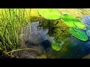 RARE Green Endlers in a NEW POND ᴴᴰ