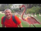 Испанский с Владом® и розовые фламинго? В Atlasnet!