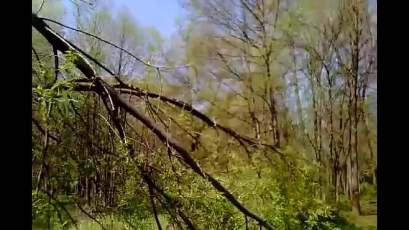 Релакс видео Болото