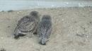 В зоопарке родились совята