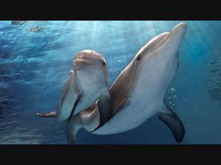 Дельфин туралы оқиға 2 (2014) Қазақша фильм