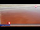 Розовое золото: на крымском озере Сасык-Сиваш начался сбор розовой соли