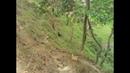 Mango Garden in Bangladesh- Mango Garden?Asian Mango-Cultivation of Mango Tree JHENIDAH