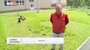 Известный в Ижевске дворник Семен Бухарин стрижет картины газонокосилкой