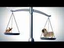 Введение в собаковедение Серия №23