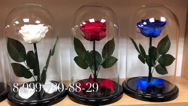 Роза в колбе отличный подарок