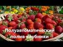 Полуавтоматический полив клубники. Semi-automatic watering strawberries