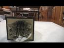 どうしても顔をいれておきたいねこ。-Maru insisted on putting on the box