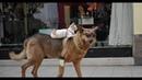 ПОПРОБУЙ НЕ ЗАСМЕЯТЬСЯ - Смешные Приколы и фейлы с Животными до слез, смешные коты 85