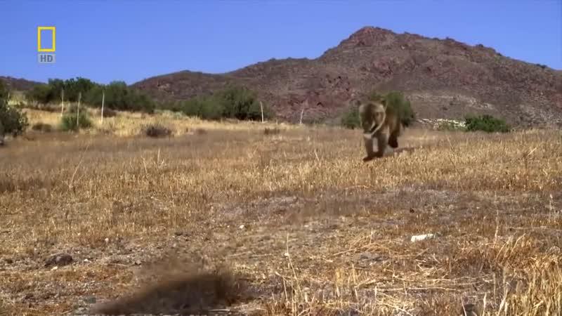 Доисторические хищники — Челюсти как бритва
