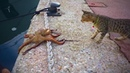 Fearless Cats 🐈 🐱 Amazing Cats Who Are Totally Badass Full Epic Laughs