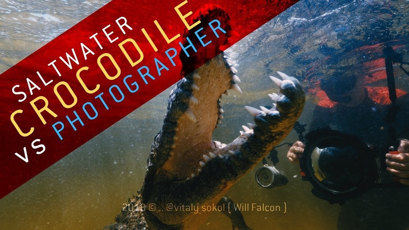 Crocodile vs Photographer