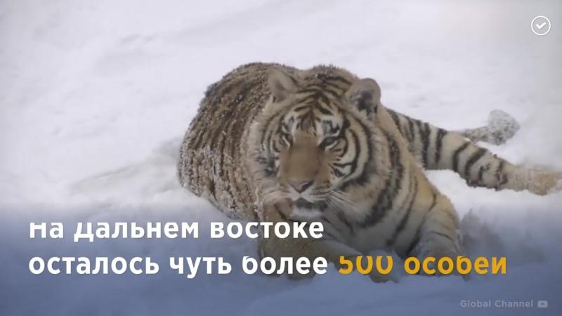 Редкие животные России. Последние из своего вида. Как их защитить?