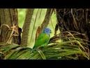 Kakadu ve Amazon Papağanı