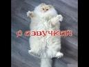 Приколы с котами и смешная озвучка животных – Попробуй не засмеяться от PSO