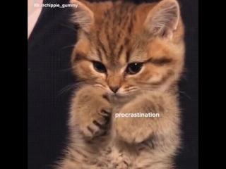 Котик понимает студента :)