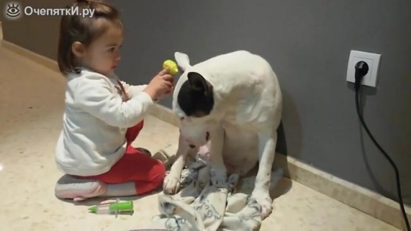 Собачка на медкомиссии
