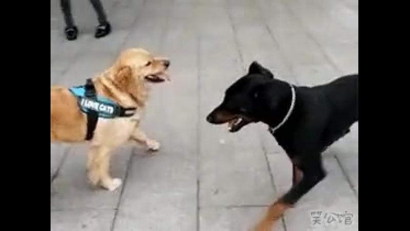 Этот пёс вырос на фильмах Ван Дамма » Freewka.com - Смотреть онлайн в хорощем качестве