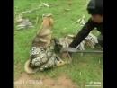 Мальчики спасли собаку от душившей ее змеи