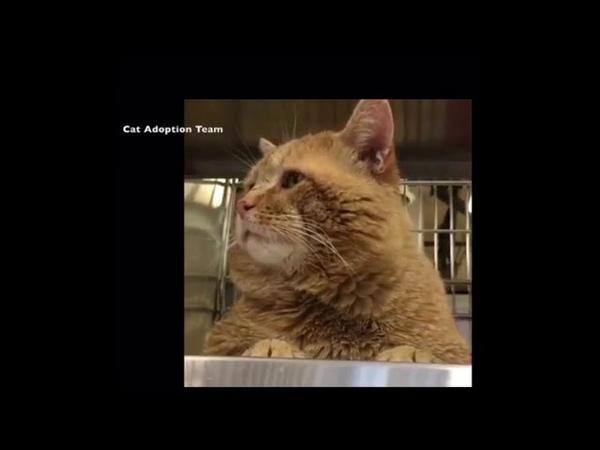 Обреченный кот заговорил Что ни спросишь отвечает манюнька