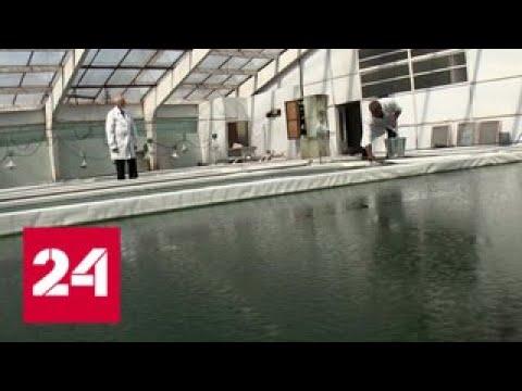 В Курской области начали выращивать спирулину на территории заброшенного колхоза - Россия 24