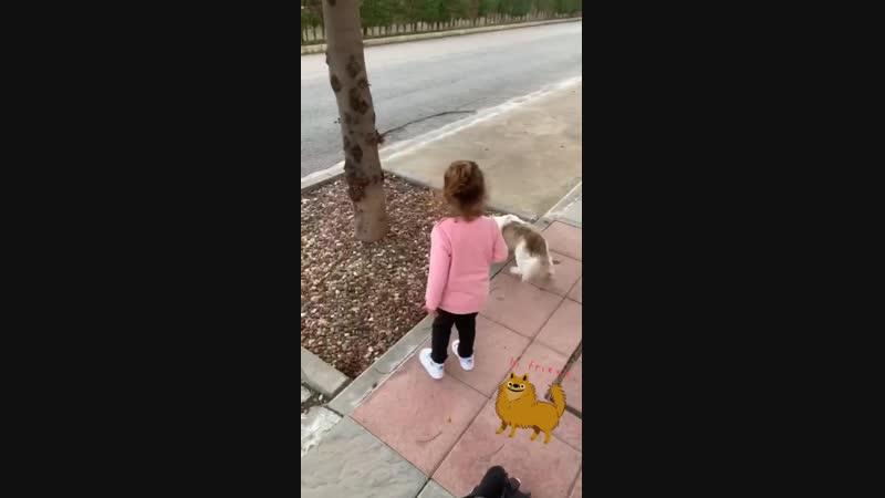 Дама с собачкой =)