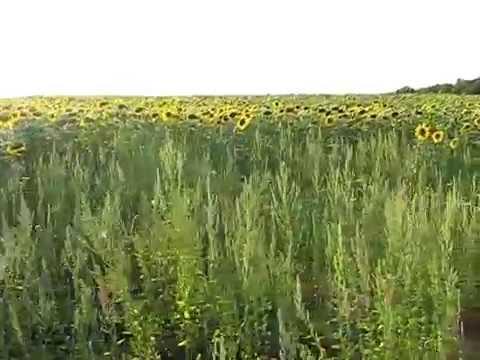 Вяловское вдхрн, Харьковская область (2009.08.11) MVI_5940