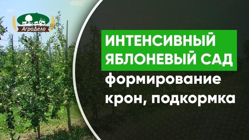 Закладка интенсивного яблоневого сада формирование кроны подготовка земли подкормка деревьев