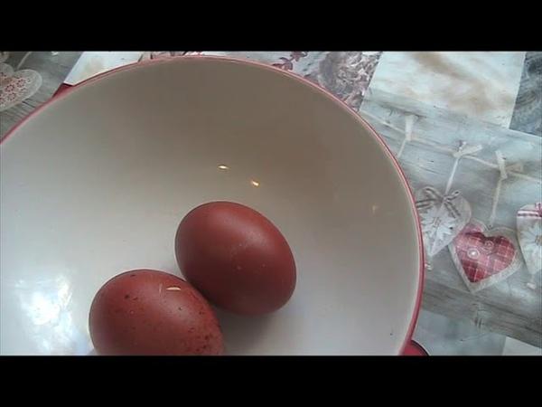 Предлагаю цыплят ч.м марана по цене яйца Предложение очень ограниченно