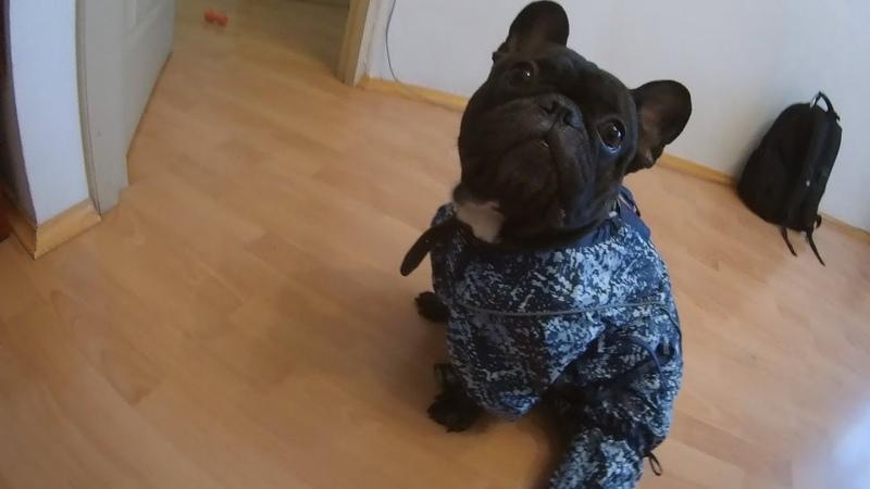 Одежда для Французского Бульдога