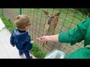 ВЛОГ контактный зоопарк Горки