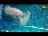 Феликс и Аврора купаются