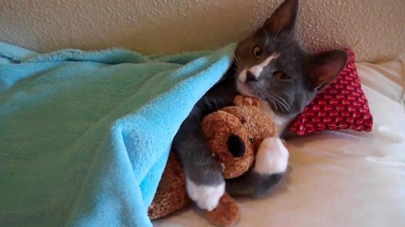 Кошка обнимает плюшевого мишку (смешное видео, хорошее настроение, юмор, мама, киса, котенок, обнимашки, любовь, кроватка).