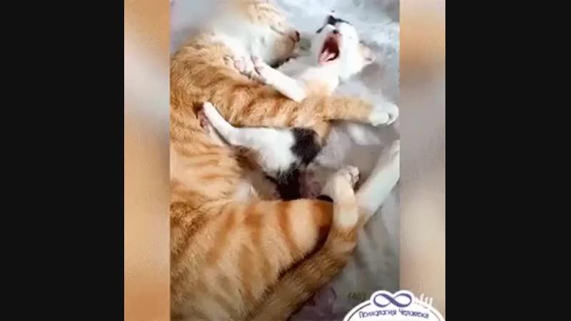 Cat filya com Brm