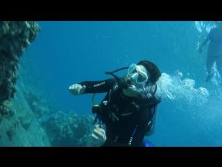 eilat coral reef