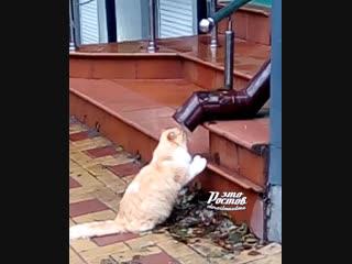 Котик пьёт воду из сточной трубы - 13.12.18 - Это Ростов-на-Дону!