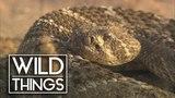 World's Deadliest Venom Killer Snakes Documentary Wild Things