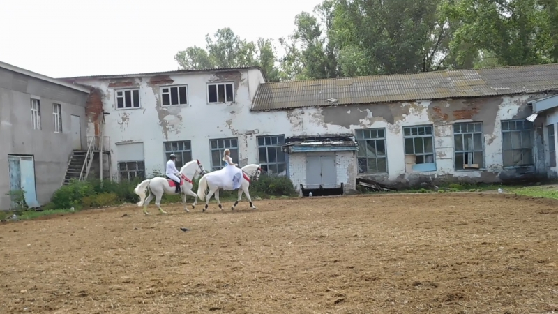 День доброй лошади в КСК Простор. Выступление Сероженко Юлии на Сандале и Рочева Дмитрия на Леогретто.