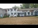 День доброй лошади в КСК Простор Выступление Сероженко Юлии на Сандале и Рочева Дмитрия на Леогретто