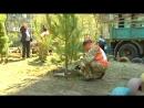 В Днепре активисты Громадськой силы массово высаживают деревья