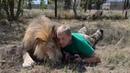 Unbelievable Hugs with Lion