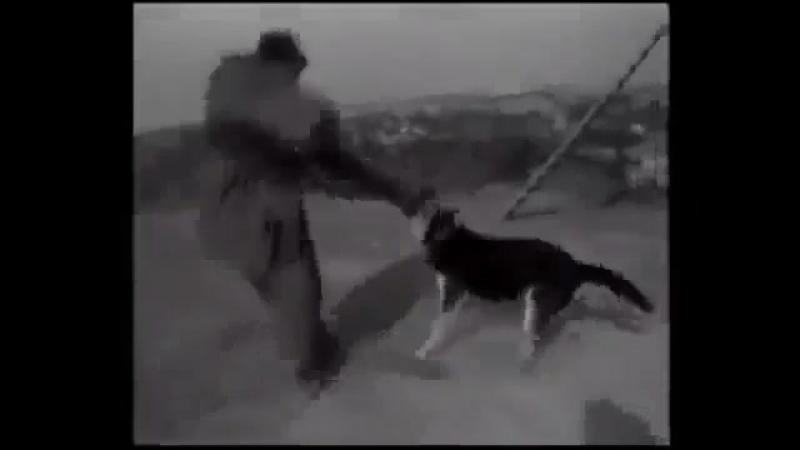 Задержание 1967 зкс