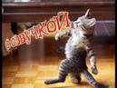 Приколы с котами – Смешная озвучка животных – Кот Мурзик и Самое смешное видео в мире - PSO